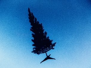 青空を飛ぶ木の写真素材 [FYI03837064]