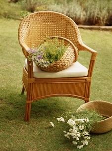 マーガレットと椅子の上にカゴに入った花の写真素材 [FYI03837197]
