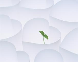 ハートの中の木の芽の写真素材 [FYI03837418]