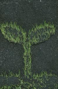 双葉型に生えた芝の写真素材 [FYI03837853]