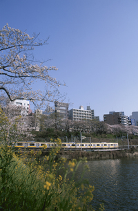 外濠の桜と電車の写真素材 [FYI03837974]