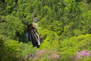 新緑の森と王滝の写真素材 [FYI03838232]