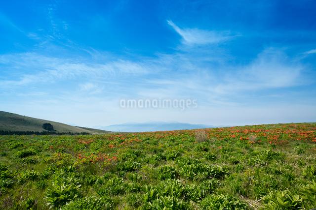 レンゲツツジが咲く霧ヶ峰より南アルプスを望むの写真素材 [FYI03838381]