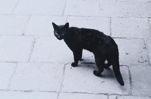 石畳の上で振り向くネコ B/Wの写真素材 [FYI03838651]