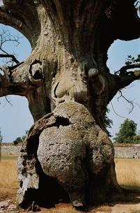 1本の木の写真素材 [FYI03838679]