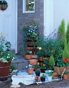ガーデニングイメージ 春の花の寄せ植えの写真素材 [FYI03839197]