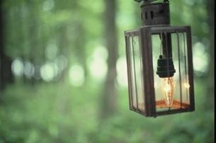 森の中の吊るされたランプ 芸北町 広島県 7月の写真素材 [FYI03839307]
