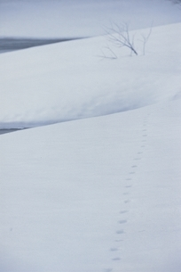 雪原の足跡と枯れ木 芸北町 広島県 2月の写真素材 [FYI03839309]
