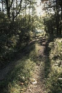 朝の森林の道と木洩れ日 芸北町 広島県 10月の写真素材 [FYI03839311]
