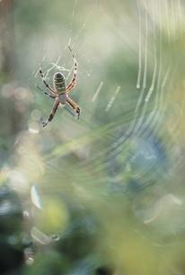 クモの写真素材 [FYI03839313]