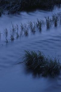 水田の水面と草 芸北町 広島県の写真素材 [FYI03839330]