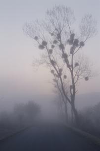 霧の木と道 芸北町 広島県の写真素材 [FYI03839344]
