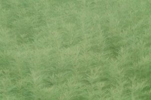 風にゆれる草 芸北町 広島県の写真素材 [FYI03839372]