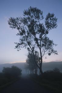 朝もやの木と山 芸北町 広島県の写真素材 [FYI03839377]