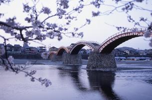 桜と錦帯橋 岩国市 山口県の写真素材 [FYI03839422]