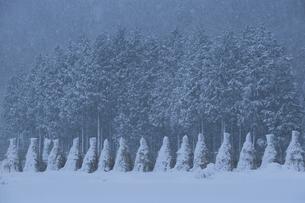 積雪 ワラボッチの写真素材 [FYI03839435]