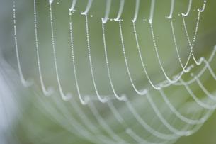 クモの巣と水滴の写真素材 [FYI03839446]