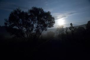 月光と木の写真素材 [FYI03839498]
