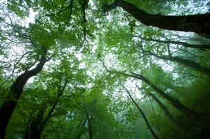 森から見上げる空の写真素材 [FYI03839557]