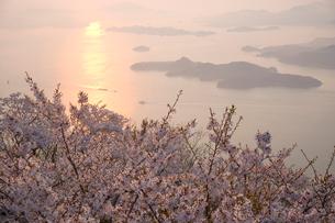朝日と瀬戸内海と桜の写真素材 [FYI03839568]