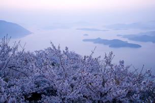 朝の瀬戸内海と桜の写真素材 [FYI03839572]