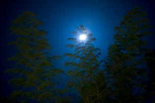 月光と竹林の写真素材 [FYI03839575]