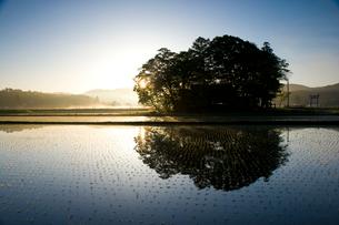 朝の水田と鎮守の森の写真素材 [FYI03839595]