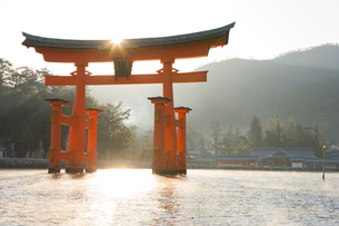 朝の宮島 厳島神社の大鳥居の写真素材 [FYI03839687]