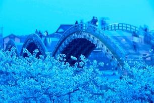 夕方の桜の錦帯橋の写真素材 [FYI03839702]