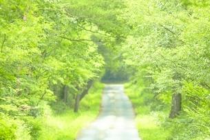 森の中の道の写真素材 [FYI03839740]