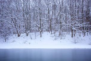 積雪の湖面と森の写真素材 [FYI03839773]