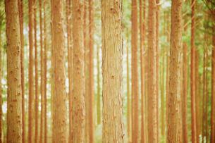 森の写真素材 [FYI03839781]