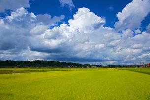 田んぼと夏雲の写真素材 [FYI03839831]