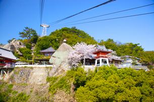 桜の千光寺公園の写真素材 [FYI03839909]
