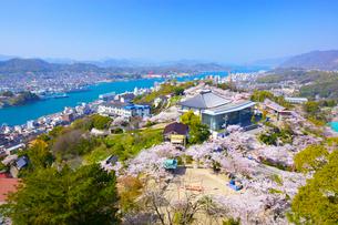 桜の千光寺公園と尾道水道の写真素材 [FYI03839910]