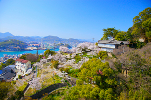 桜の千光寺公園の写真素材 [FYI03839911]