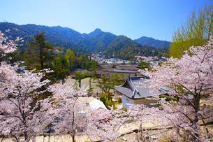宮島 厳島神社と桜の写真素材 [FYI03839929]