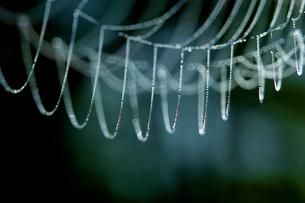 クモの糸と水滴の写真素材 [FYI03839955]