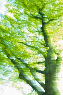 新緑の森の写真素材 [FYI03839958]
