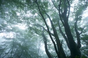 霧の漂う森の写真素材 [FYI03839966]