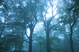 霧の中の森の写真素材 [FYI03839968]