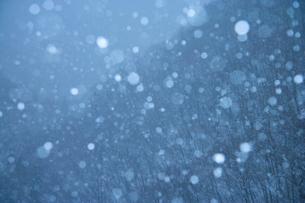 雪の舞う森の写真素材 [FYI03839974]