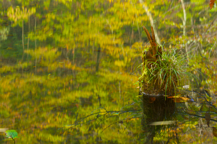 森を映す秋の水面の写真素材 [FYI03839978]