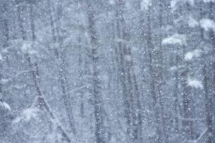 森と雪の写真素材 [FYI03839980]