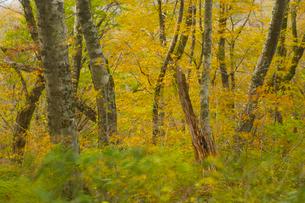 秋の森と烈風の写真素材 [FYI03839981]