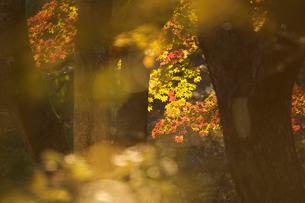 秋の森の写真素材 [FYI03839985]