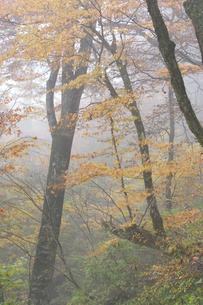 秋の森の写真素材 [FYI03839986]