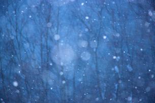 雪降る森の写真素材 [FYI03839991]