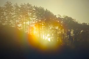 虹色の朝霧と森の写真素材 [FYI03839993]