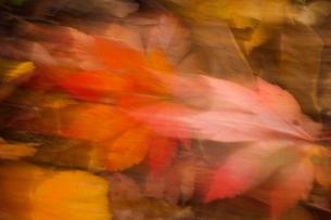 風に舞う落ち葉の写真素材 [FYI03840002]